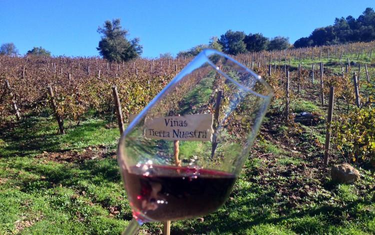 Copa de vino de los viñedos del Cerro de San Cristobal, Almonaster (Huelva, España)