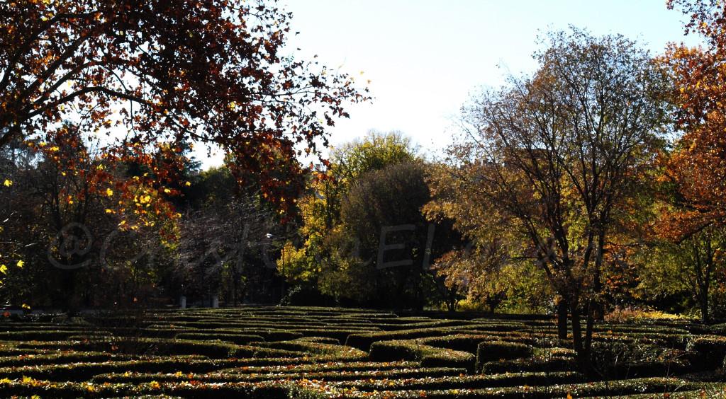 Laberinto de laurel del parque del Capricho – Madrid (España)