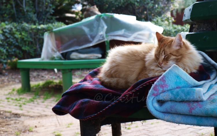 Casas de gatos en el Parque de la Indepedencia de Sliema (Malta)