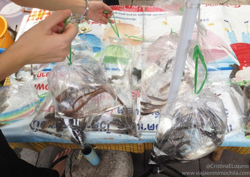 Animales secuestrados para librerar. Bangkok (Tailandia)