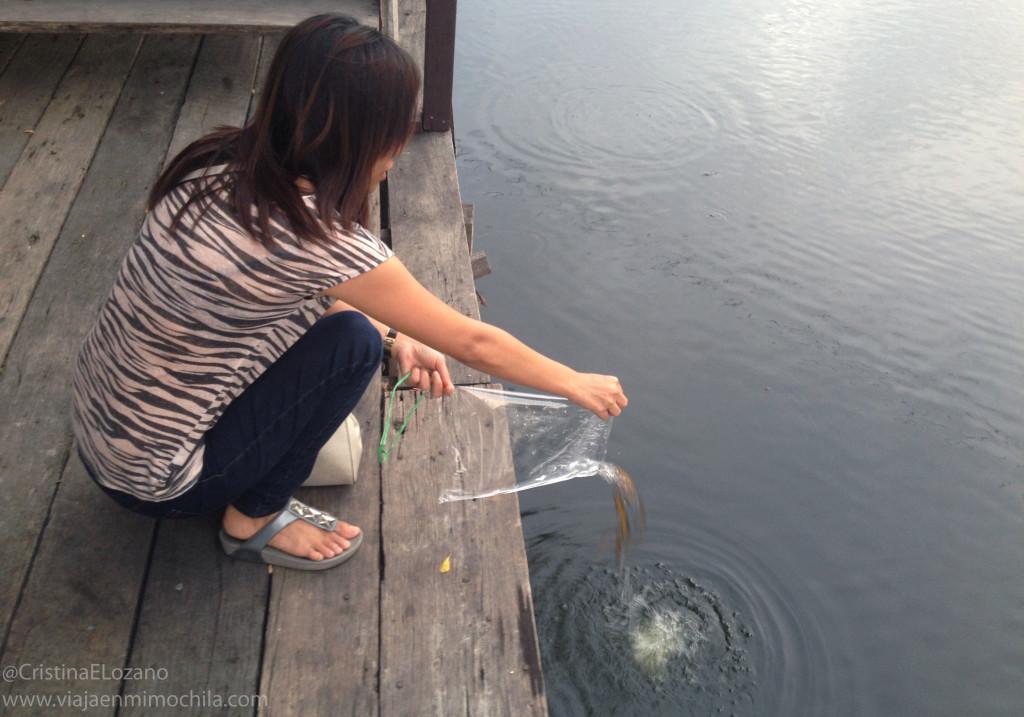Libreación de animales en cautividad. Bangkok (Tailandia)