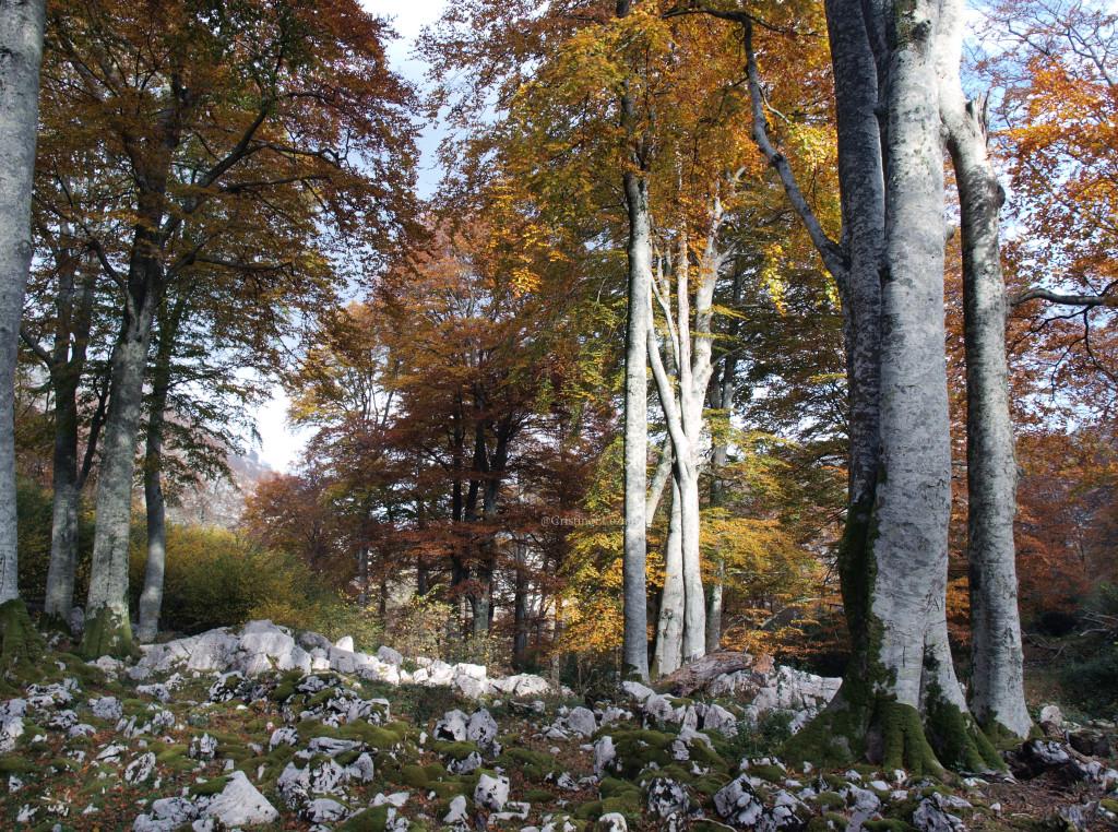 Ruta del Hoyo Masallo, de Valle a Riba en otoño. Valle de Soba (Cantabria)