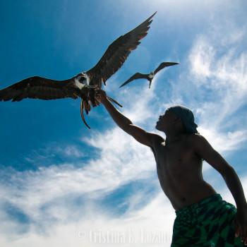 Aves en el Caribe de Belice