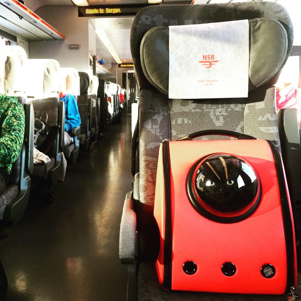 trasportin para viajar con gato en tren