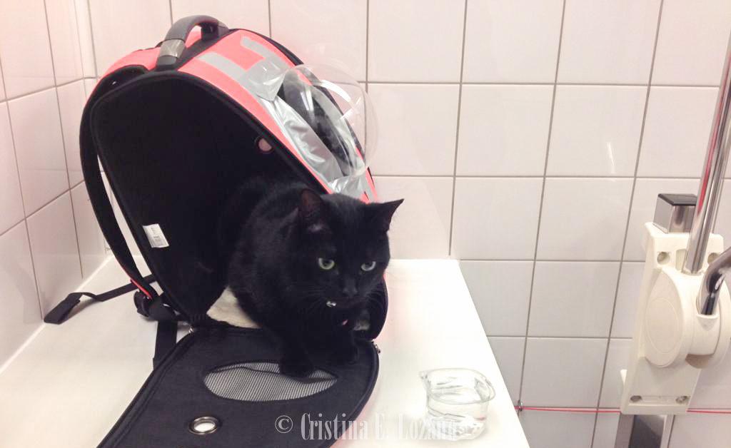 Transportin homologado para viajar en avión y volar con un gato-15