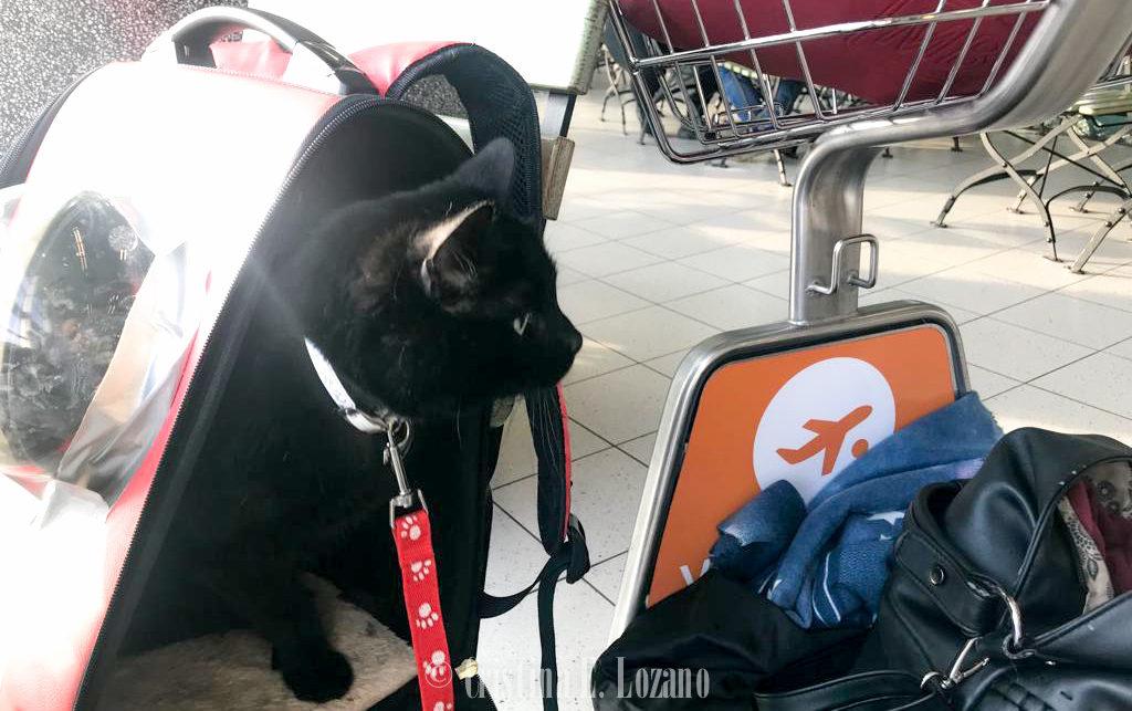 Transportin homologado para viajar en avión y volar con un gato-24